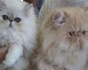 Рекламный отдел - помощь в продаже котят