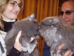 Получаемые рещультаты в клубах кошек АПКЛК не оставляют равнодушными ни одного любителя кошек
