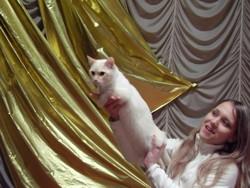 Кошки системы PCA отмечены вниманием всех клоубов и систем